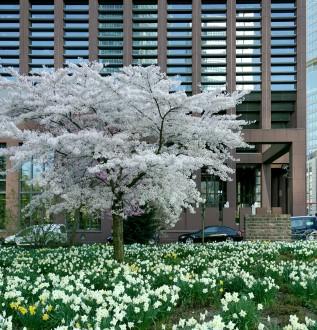 Im Frühling blüht es reichlich vor dem Gebäude in der Frankfurter Innenstadt.