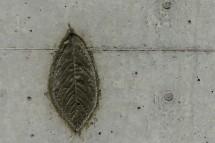 Einige im Beton wie ein Fossil hinterlegte Blätter erinnern an die Kirschbäume, die dem Bau weichen mussten.
